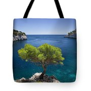 Lone Pine Tree Tote Bag