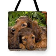 Long-haired Dachshunds Tote Bag