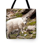 Mountain Goat Kid On Mount Evans Tote Bag