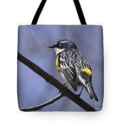 Myrtle Warbler Tote Bag