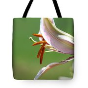Oriental Lily Named Tiger Edition Tote Bag