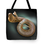 Parasitic Worm Schistosoma Tote Bag