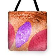 Platelet And Red Blood Cells, Tem Tote Bag