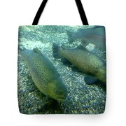 Rainbow Trout Tote Bag by Les Cunliffe