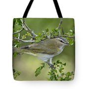 Red-eyed Vireo Tote Bag