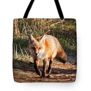 Red Fox In Prospect Park Tote Bag