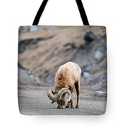 Rocky Mountain Big Horned Sheep Tote Bag