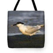 Sandwich Tern Tote Bag