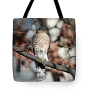 Sharp-shinned Hawk 2 Tote Bag