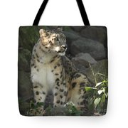 Snow Leopard On The Prowl Tote Bag