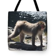 Snow Monkey Tote Bag