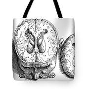 Vesalius: Brain, 1543 Tote Bag