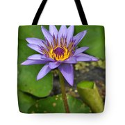 Water Lily  9 Tote Bag