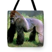 Western Lowland Gorilla Silverback Tote Bag