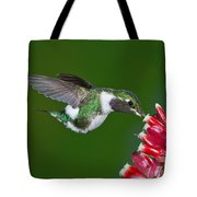White-bellied Woodstar Tote Bag