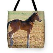 Wild Horse Foal Tote Bag