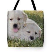 Yellow Labrador Retriever Puppies Tote Bag