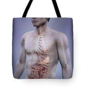 Human Anatomy Tote Bag