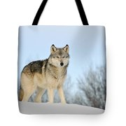 Wolf In Winter Tote Bag