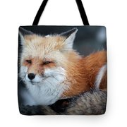 A Red Fox  On The Summit Of Mt Tote Bag