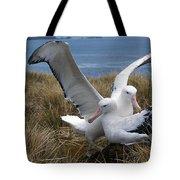 Albatros Royal Diomedea Epomophora Tote Bag