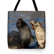 Antarctic Fur Seals Tote Bag