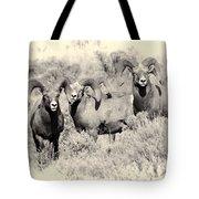 Big Horn Sheep Tote Bag