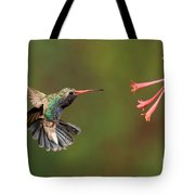 Broad Billed Hummingbird Tote Bag