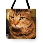 Brown Tabby Tote Bag