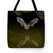 California Leaf-nosed Bat At Pond Tote Bag