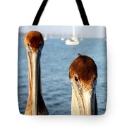 California Pelicans Tote Bag
