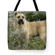 Canary Dog Tote Bag