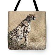 Cheetah Searching For Prey Tote Bag