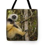 Diademed Sifaka Madagascar Tote Bag