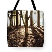 Forest Sunlight Tote Bag