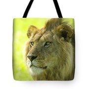Golden Boy Tote Bag