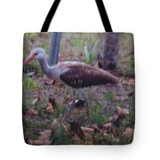 Juvenile White Ibis Tote Bag