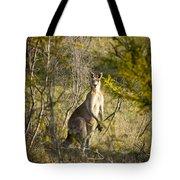 Kangaroo Tote Bag