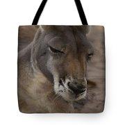 Kangaroos Tote Bag