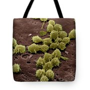 Macrophages On The Surface Tote Bag