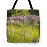 Maine Wild Lupine Flowers Tote Bag
