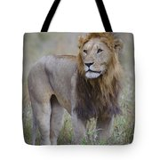 Male Lion Tote Bag