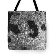 Mitotic Spindle, Tem Tote Bag