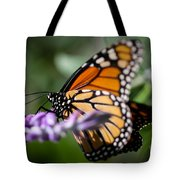 Monarch Danaus Plexippus Tote Bag