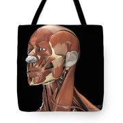 Muscles Of The Head And Neck Tote Bag