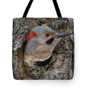 Northern Flicker In Nest Cavity Alaska Tote Bag