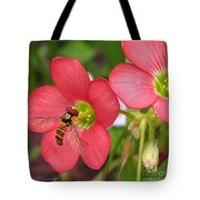 Oxalis Deppei Named Iron Cross Tote Bag