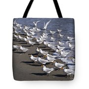 Royal Terns On The Beach At Indialantic In Florida Tote Bag