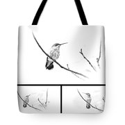 Ruby-throated Hummingbird - Immature Female - Black And White - Archilochus Colubris  Tote Bag
