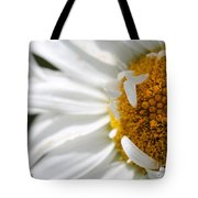 Shasta Daisy Named Paladin Tote Bag